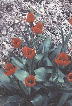 Tulips by Thomas Armstrong