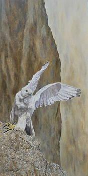 White Gyrfalcon...feel free.... by Erna Goudbeek