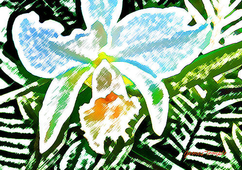 James Temple - White Orchid