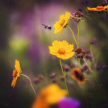 Wild Flowers by Kim Zier
