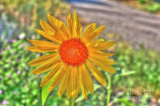 Rod Wiens - Wildflower
