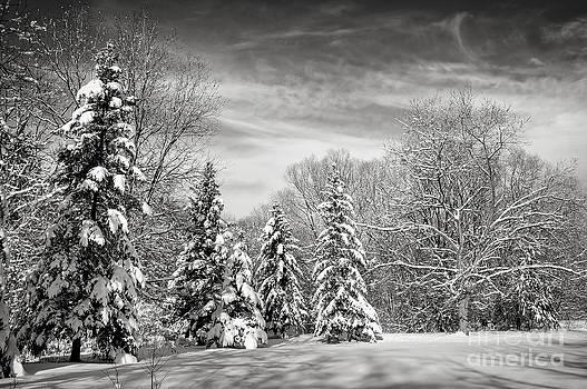 Elena Elisseeva - Winter landscape