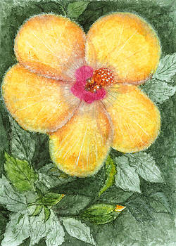 Pam Belcher - Yellow Flower
