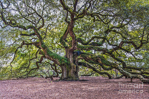 Dale Powell - Mystical Angel Oak Tree