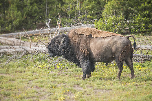 Thomas Schreiter - Yellowstone N.P.