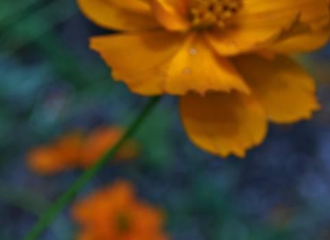 222 Petals by Tara Miller