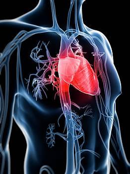 Human Vascular System by Sebastian Kaulitzki