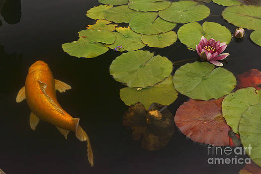 263 Orange Koi And Flower by Lawrence Costales