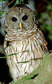 Barred Owl by Millard H. Sharp