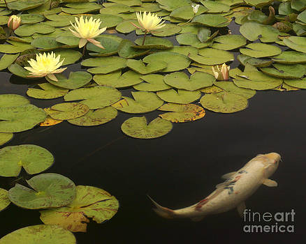 288 Yellow Flowers Yellow Koi by Lawrence Costales