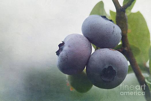 Blueberries by Cindi Ressler