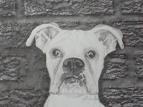 Boxer  by Skyrah J Kelly