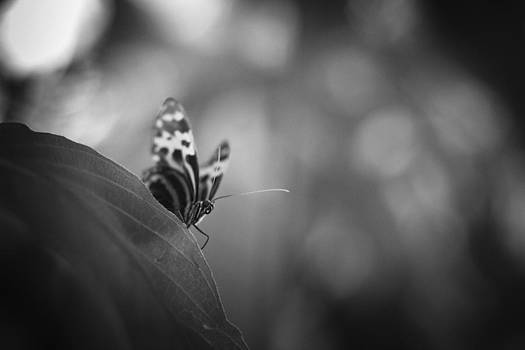 Butterfly Black And White by Bradley R Youngberg