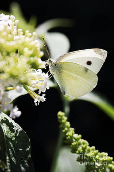 LHJB Photography - Butterfly