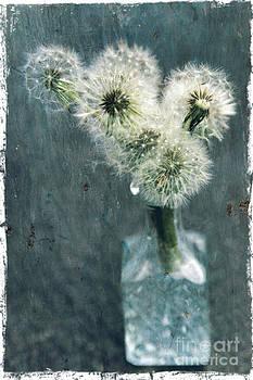 Sophie Vigneault - dandelions