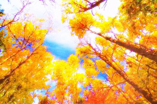 Fall Color  by Saibal Ghosh
