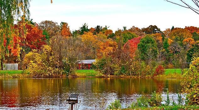 Fall colors in Ann Arbor by Shaivi Divatia