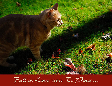 Fall in Love avec Ti-Poux by Gino Carrier