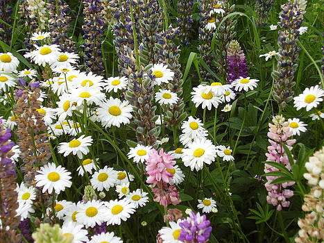 Flower Garden by Yvette Pichette