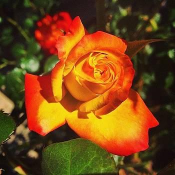 #floweroftheday #flowerstyles by Mark Jackson