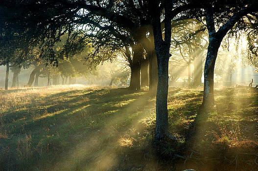 Robert Anschutz - Foggy Sunrise