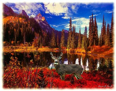 Heavens Wilderness by Charles Ott