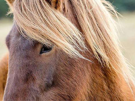 Icelandic Horse by Vinicios De Moura