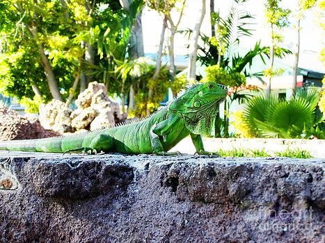 Iguana by Zsuzsa Lado