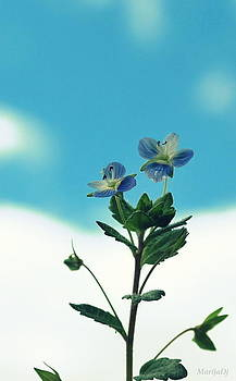 In blue by Marija Djedovic