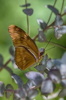 Saija  Lehtonen - Julia Butterfly