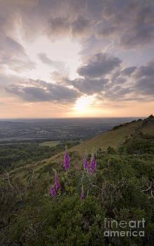 Angel Ciesniarska - Malvern Hills