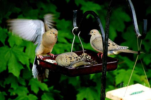 3 Morning Doves by Tabatha Knox