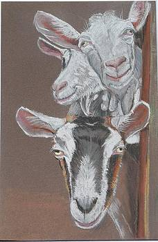 3 Nosey Goats by Teresa Smith