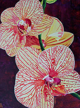 Orchids by Terry Holliday