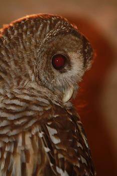 Owl by Tinjoe Mbugus