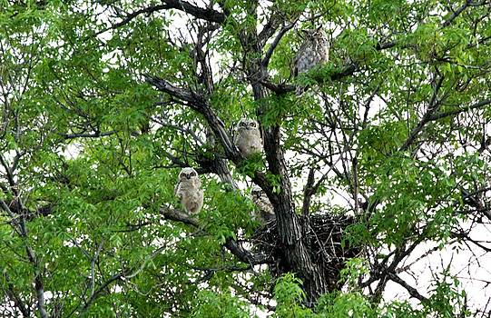 3 owlets and OWL for family portrait by Rebecca Adams