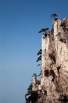 Pine trees on Huangshan Mountain China by Fototrav Print