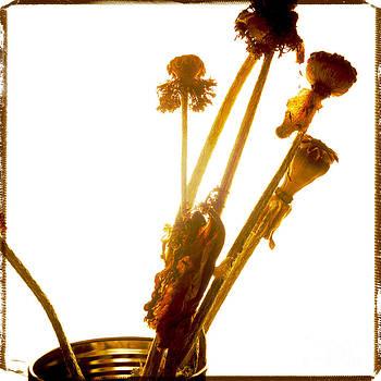 BERNARD JAUBERT - Poppies