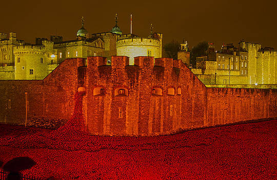 David French - Poppies Tower of London night