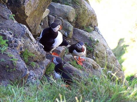 3 Puffins by George Leask