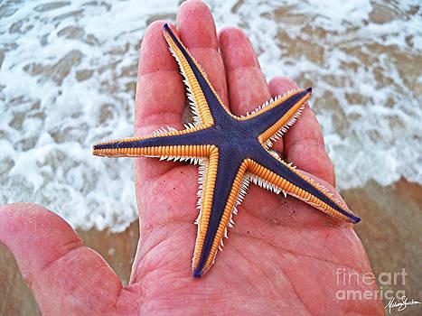 Royal Starfish - Ormond Beach Florida by Melissa Sherbon