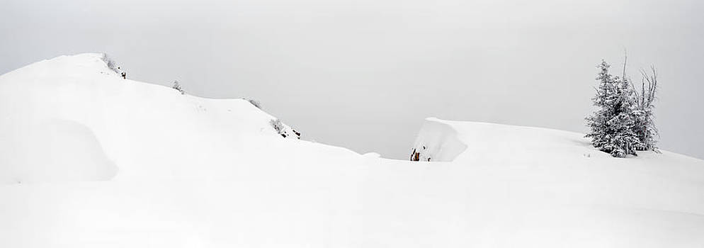 Snow Drift  by Tom Cuccio