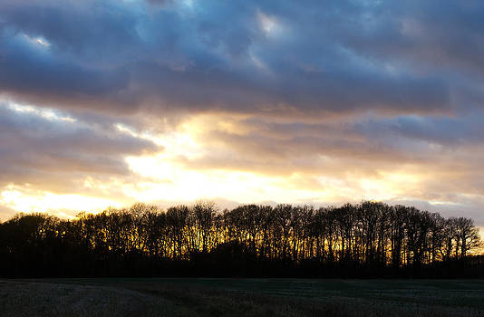 Fizzy Image - sunset over trees in an english field