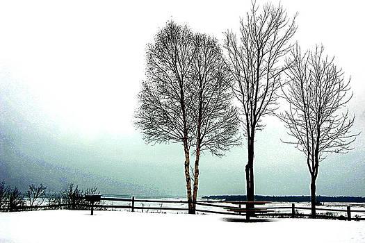 3 Trees by Dawn Dreibus