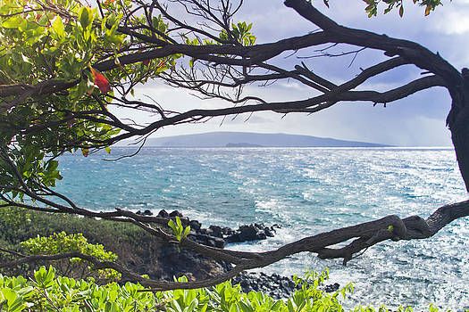 Wailea Point Maui Hawaii by Sharon Mau