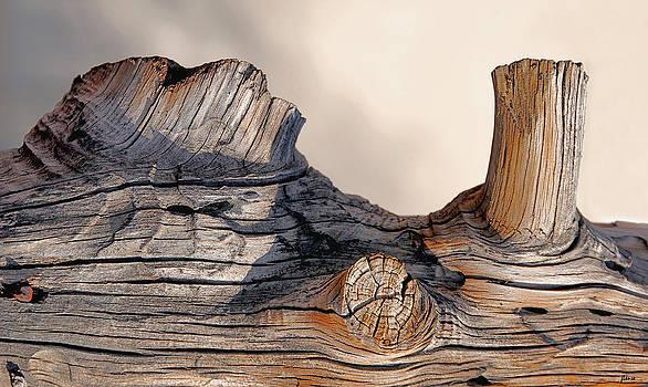 Wooden Landscape by JoAnn Lense