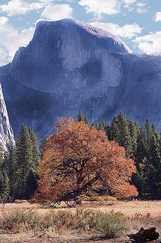 Yosemite National Park by Yosi Cupano