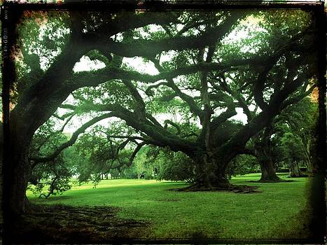 300 Years Old Oak Trees by Tonya Mower Zitman