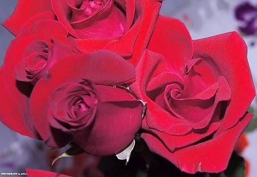 Roses for you by Gornganogphatchara Kalapun