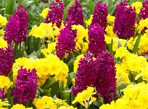 Fizzy Image - a variety of bright colourful spring flowers blooming in St Jame